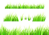 Grass vector isolated on white background. Tufts of grass. Green summer lawn set