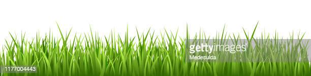 grass vector seamless - grass stock illustrations