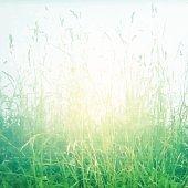 Grass Vintage Poster