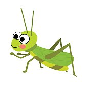 Grasshopper animal cartoon character vector illustration.