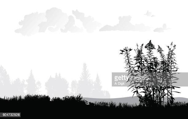 grassy fields with weeds - wildflower stock illustrations
