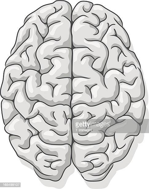 Gray matter, Human brain.