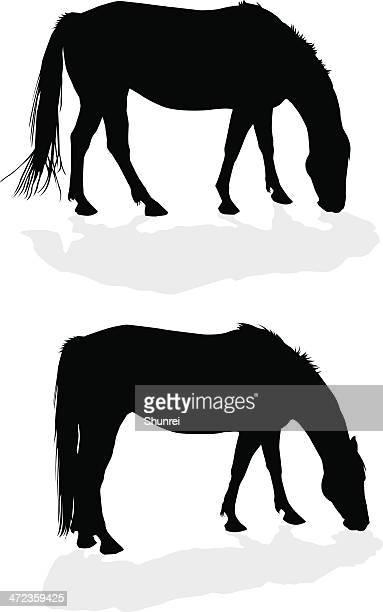grazing horse - mare stock illustrations, clip art, cartoons, & icons