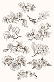 Great collection of highly detailed hand drawn flowers isolated on white background. Magnolia, poppy, plumeria, anemone, orchid. For invitation, logo, wedding, design. Vector