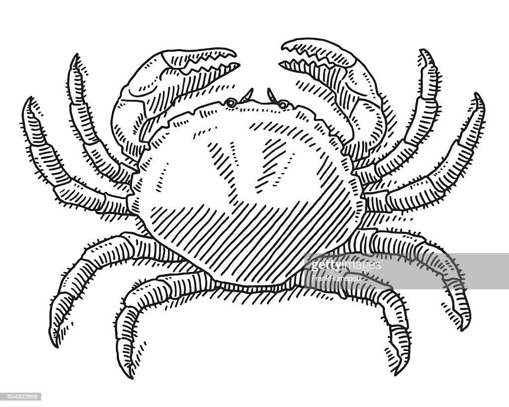 Great Crab Sea Animal Drawing : stock illustration