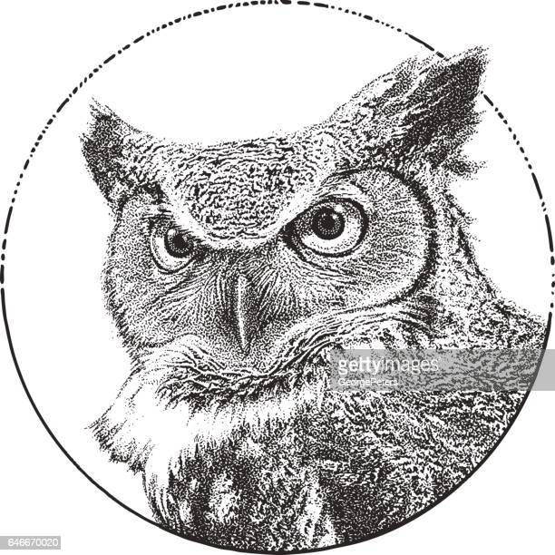 great horned owl close up - owl stock illustrations