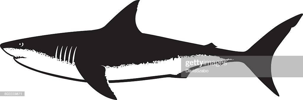 Great White Shark Silhouette Isolated on White