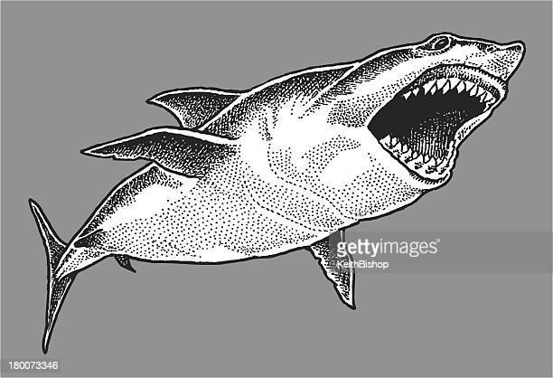 great white shark - great white shark stock illustrations, clip art, cartoons, & icons