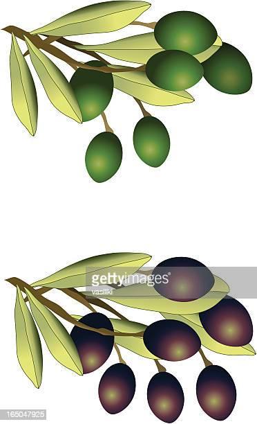 green and black olives (vector) - kalamata olive stock illustrations