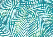 Green and blue palm leaves background