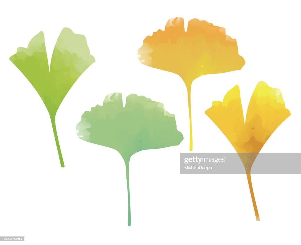 Green and yellow ginkgo leaves watercolor effects