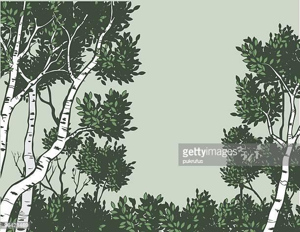 green aspen - aspen tree stock illustrations, clip art, cartoons, & icons