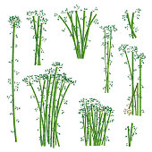 Green bamboo illustration set. Vector.