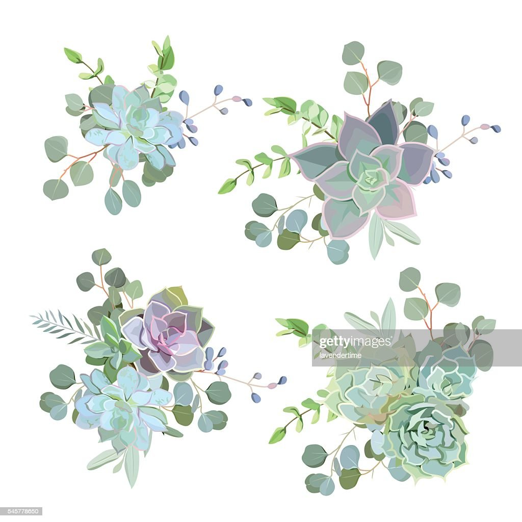 Green colorful succulent Echeveria vector design objects