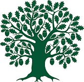 Green drawing of an oak tree with acorns