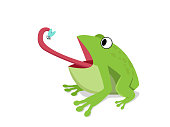 Green frog eat insect on white, cartoon vector