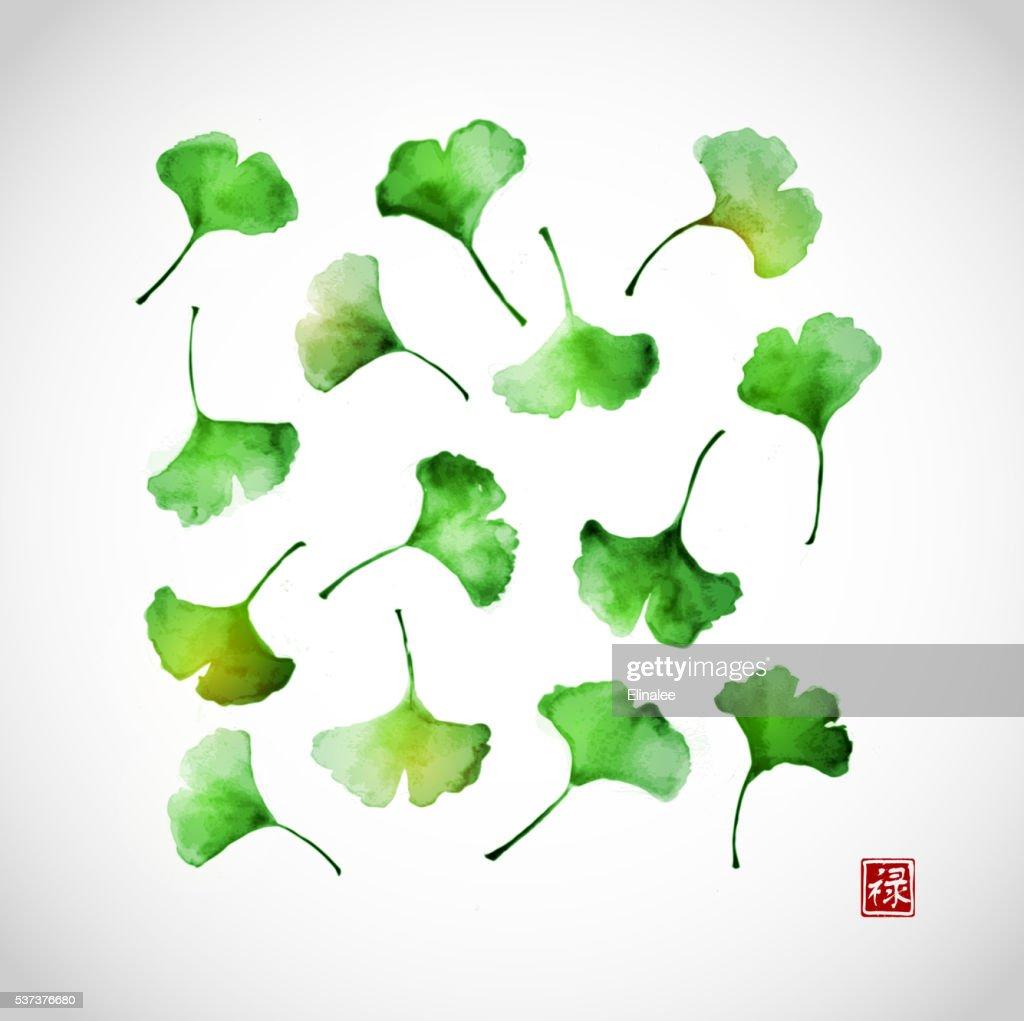 Green ginkgo biloba leaves