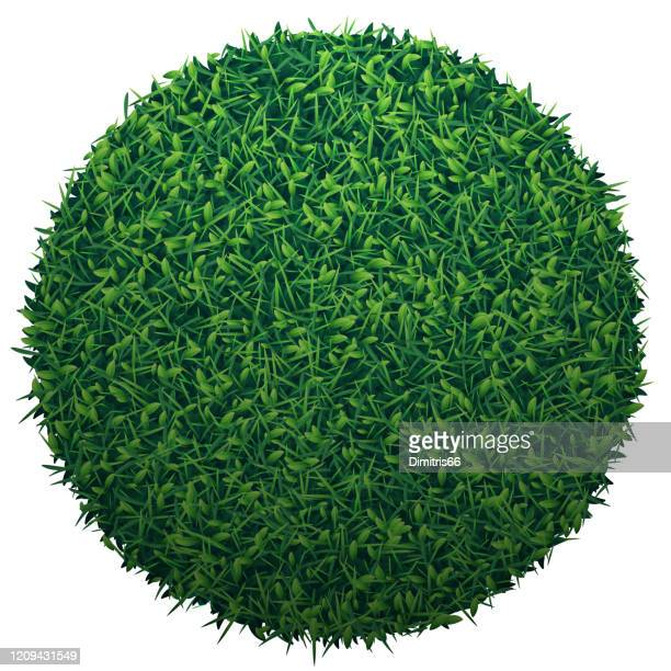 green globe of grass isolated on white background - grass stock illustrations