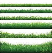 Green Grass Big Borders Collection