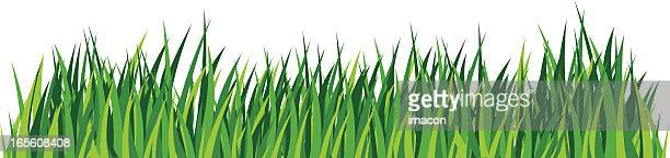 green grass, lawn. detailed illustration - blade of grass stock illustrations