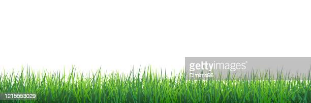 green grass seamless border - blade of grass stock illustrations
