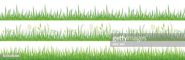 Green Grass - Seamless - Illustration