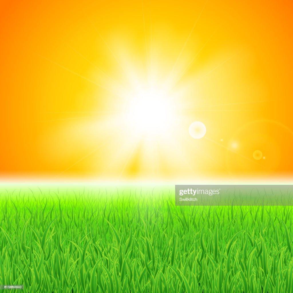 Green grass under the sun