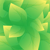 Green leaf background vector.Beautiful leaves texture background.Abstract nature wallpaper.