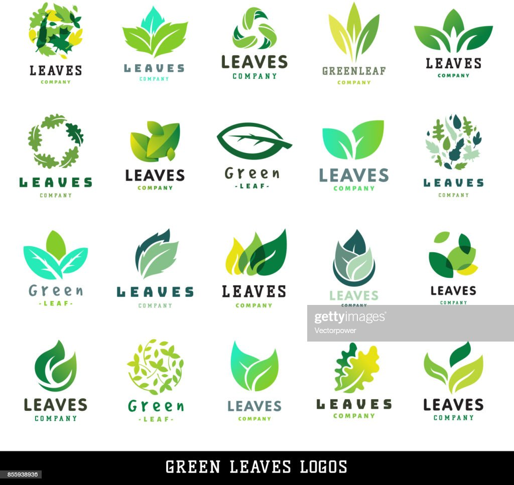 Green leaf eco design friendly nature elegance label natural element ecology organic vector illustration