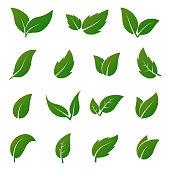 Green leaf vector icons. Spring leaves ecology symbols
