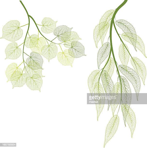 green leaf - macro stock illustrations