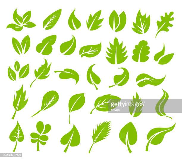 green leaves icon set - mint leaf culinary stock illustrations, clip art, cartoons, & icons
