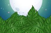 Green leaves on full moon night
