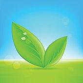 Green leaves. Vector 10 eps