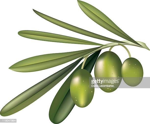 ilustraciones, imágenes clip art, dibujos animados e iconos de stock de aceituna verde - rama de olivo
