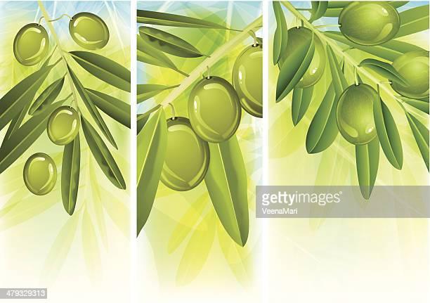 green olive - green olive fruit stock illustrations