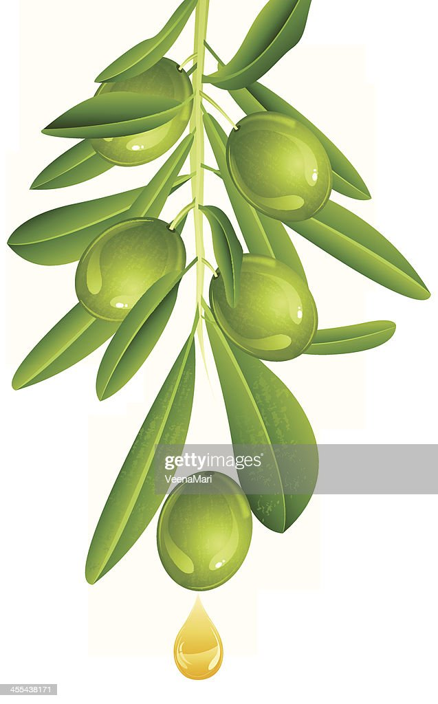 Green Olive With Oil : stock illustration