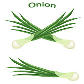 Green onions close-up. Fresh green onion, isolated on white background. Green vegetables. Vector illustration.