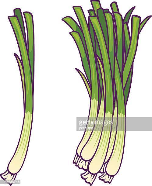 illustrazioni stock, clip art, cartoni animati e icone di tendenza di verde cipolle - cipollina