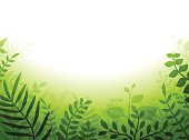 Green Plant Border