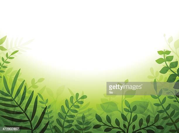 grüne pflanze grenze - gedeihend stock-grafiken, -clipart, -cartoons und -symbole