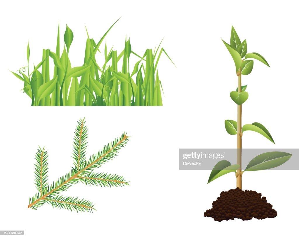 Verführerisch Grüne Pflanzen Referenz Von Grüne : Vektorgrafik