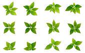 Green realistis leaf set.