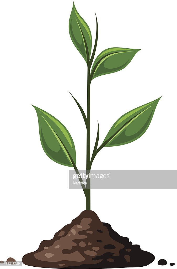 Green sprout in the ground. Vector illustration.