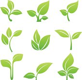 Green sprout symbol vector icon set