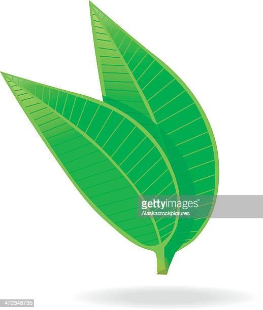 green tea leafs. - green tea stock illustrations, clip art, cartoons, & icons