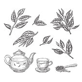 Green tea sketch vector illustration. Leaves, teapot and cup hand drawn isolated design elements