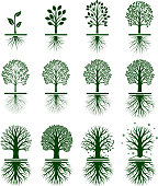 Green Tree Growing in nature vector icon set