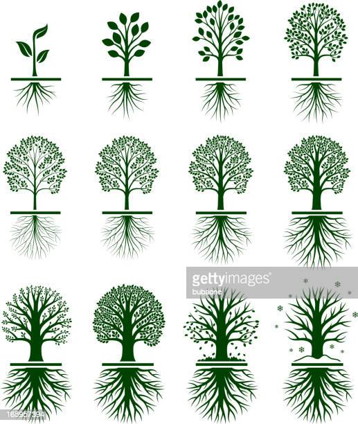 green tree growing in nature vector icon set - root stock illustrations, clip art, cartoons, & icons