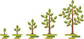 Green tree growth vector diagram